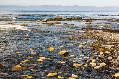 Rocks, Kelp, Sea & Mountains - typical PNW