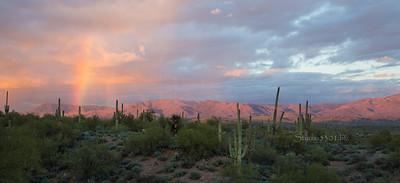 Rainbow Cactus Salt Riv 7496