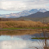 Salt River_reeds_reflection 7235 - Copy