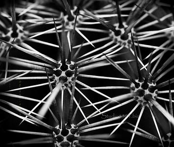 Cactus spines B&W 7339Ctst BK