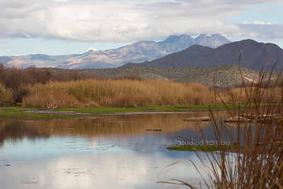 Salt River_reeds_reflection 7235