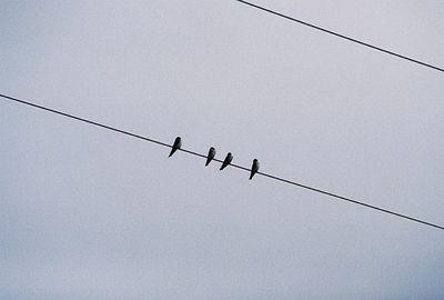 2/19/05 Northern Rough-Winged Swallows. Ag fields, ponds, Salton Sea off Garst Rd (from Sinclair Rd). Salton Sea Tour, Salton Sea International Bird Festival, Imerial County, CA