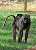 Samburu Game Reserve0001_252