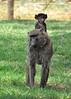 Samburu Game Reserve0001_251