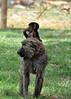 Samburu Game Reserve0001_250