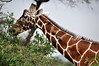Samburu Game Reserve0001_264