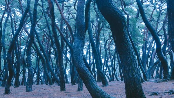 Samneung Forest, Gyeongju