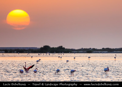 Middle East - GCC - United Arab Emirates - UAE - Emirate of Ras Al Khaimah - RAK - Bay with shallow waters and sand islands ideal for Flamingos to wonder around at Sunset