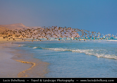 Middle East - Sultanate of Oman - Dhofar Province - Salalah Area - صلالة - Ṣalālah - Al-Mughsayl Beach - Al Maghseel - Mughsail - Maghsail - Scenic coastal location along Indian Ocean with rugged mountains