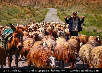 Armenia - Geghama mountains - Ghegam Ridge - Gegam - Գեղամա լեռնաշխթա - Shepard with Sheeps walking on the road