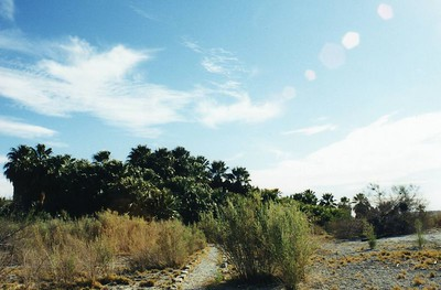 san_andres_oasis0004