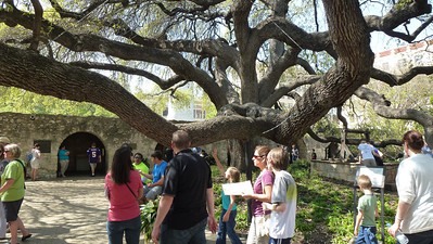 Huge Oak Tree
