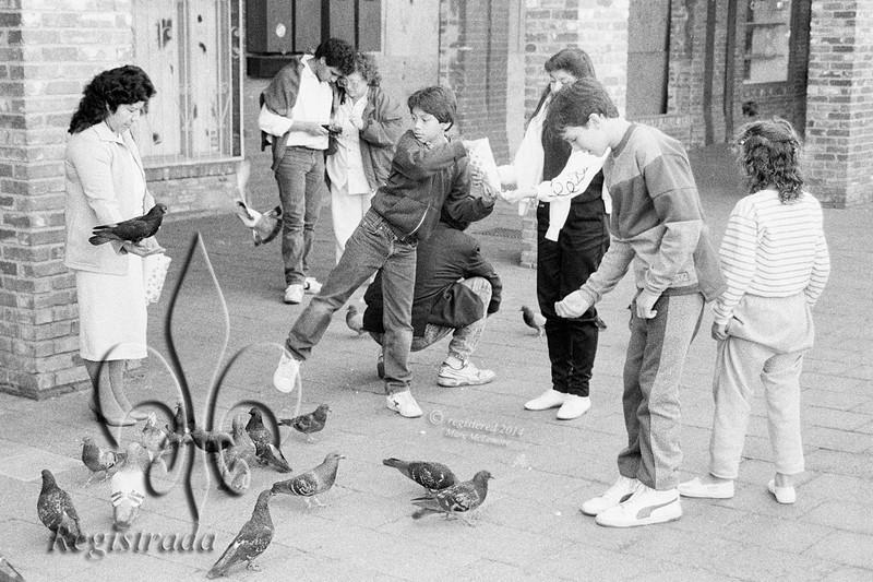 Pigeon Lady
