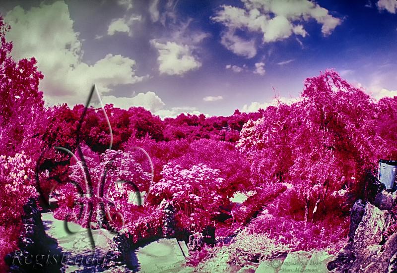 Sunken Gardens...