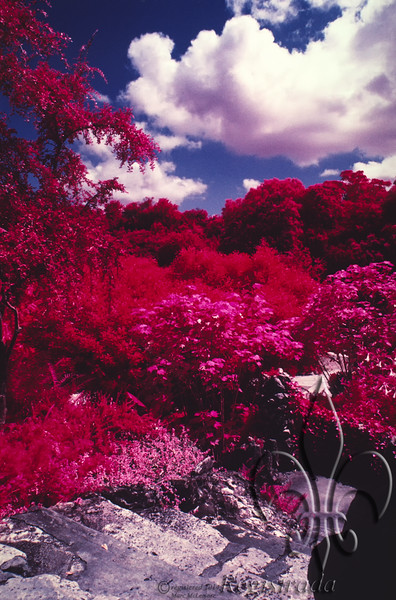 Sunken Gardens, Brackenridge Park