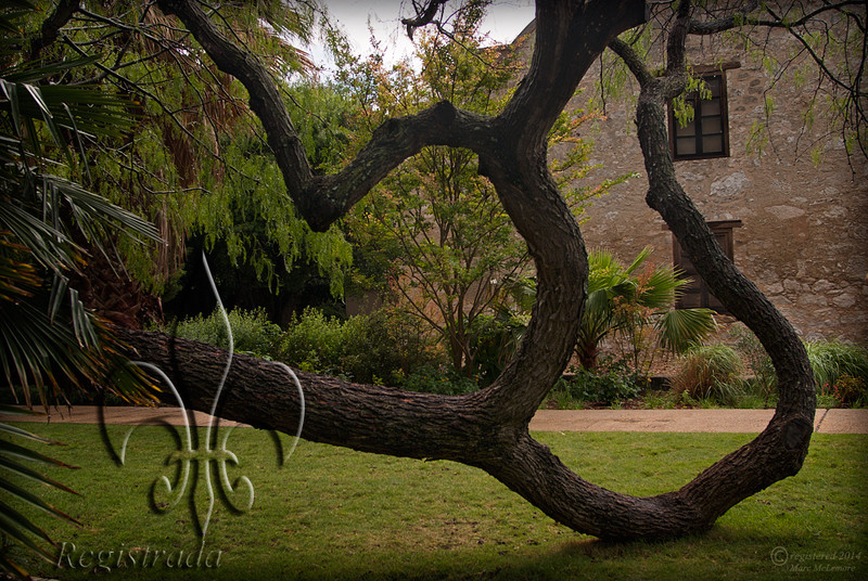 Alamo grounds
