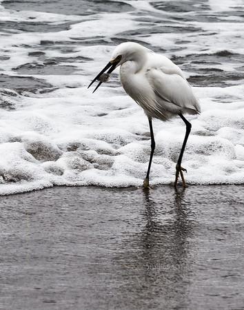 bird B&W egret beach SD 3871