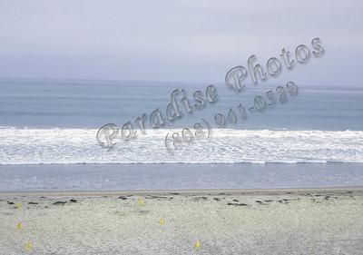Pacific Beach 100310 829