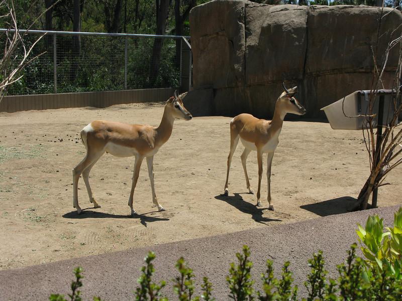 Sam's San Diego Zoo Photos