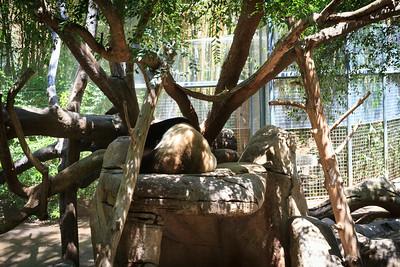 Giant Panda Butt