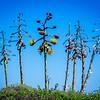 Plant life in Cabrillo