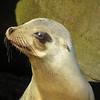Seals find their space in La Jolla