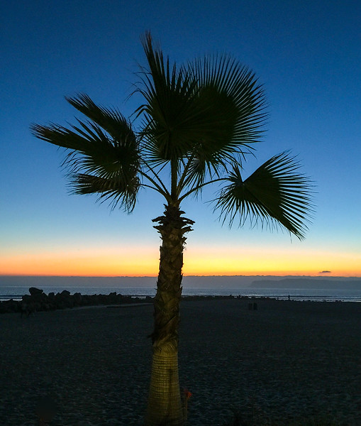 Fan Palm greeting sunset in Del Ray