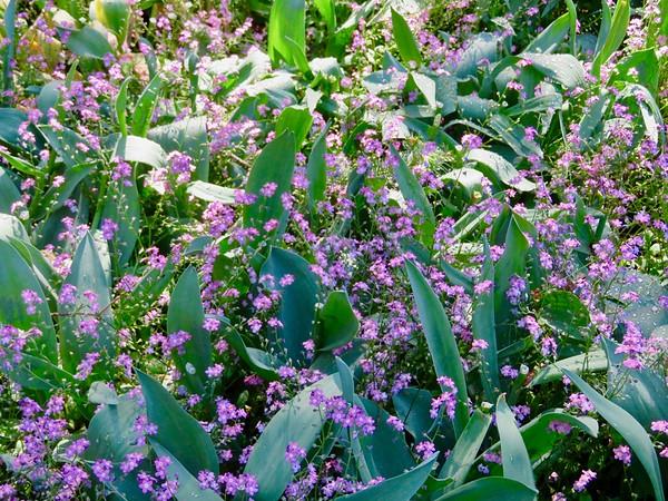 Butchart Flower Garden