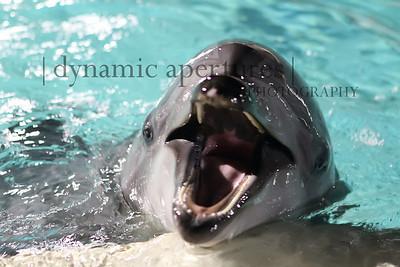 SeaWorld, San Diego, CA - Dolphin Pool