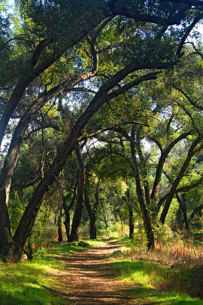 Path through the oak trees near Ramona, California.