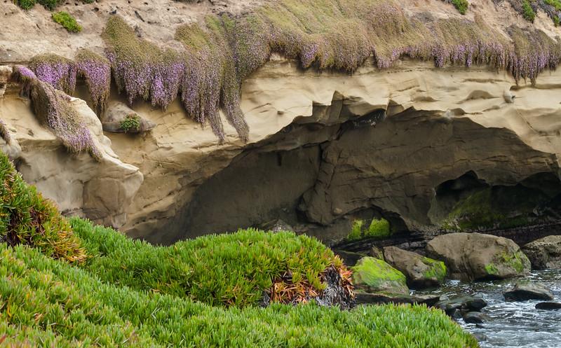Ice Plant on Sandstone Overlooking the Surf, La Jolla