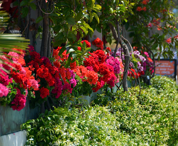 Flowers in Sea Port Village, San Diego.