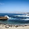 Seals basking in the sun at La Jolla Cove