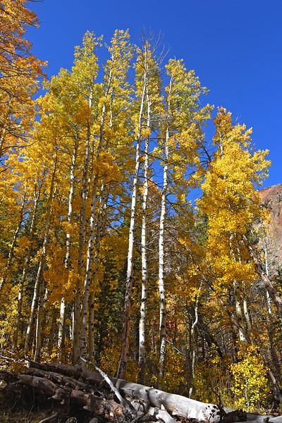 Lundy Canyon Aspens, October 2020