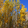 Lundy Canyon Aspens, October 2020