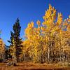 Brilliant fall morning near Lake Sabrina, Bishop Creek Canyon, California