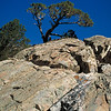 Trailside view of rock and tree in the Eastern Sierra.