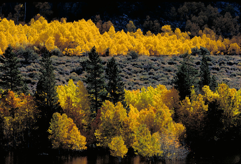 Autumn colors in the June Lakes loop in the Eastern Sierra of California.