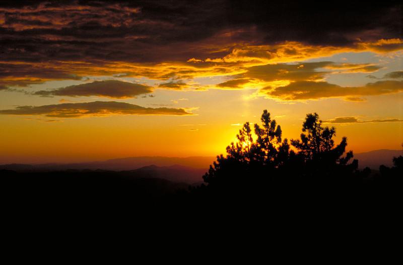 Sunset through the pines near Idyllwild, California.