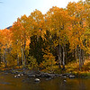 Autumn color aspens along Rush Creek, June Lake loop, October 2020