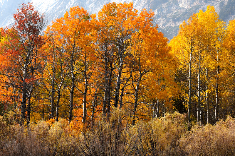 Autumn color in the June Lake loop, October 2020