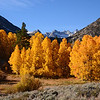 Fall Aspens near North Fork Bishop Creek, Eastern Sierra, California.