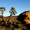 Joshua Tree National Park , just before sunset on a nice day in April.