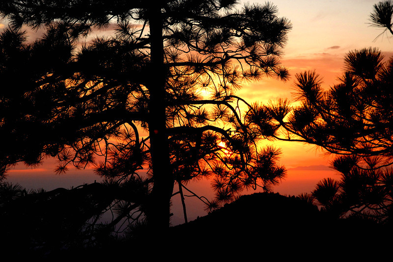 Sunset through the pines on Mt. San Jacinto.