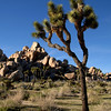 Late afternoon in Hidden Valley in Joshua Tree National Park.