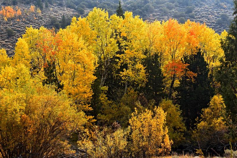 June Lake loop Autumn color, October 2020