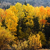 June Lake loop Autumn color, October 2020