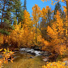 Beautiful October afternoon along Rock Creek in the Eastern Sierra.