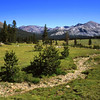 Eastern Sierra meadow near Tioga Pass and Yosemite in California.
