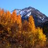 Fall Aspens in Bishop Creek Canyon, Eastern Sierra, California.